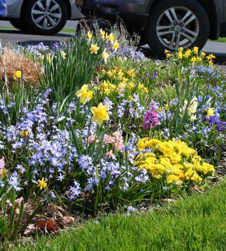 Cindy's Flower Garden in April