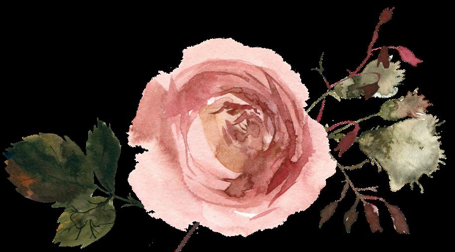 pink rose, white flower